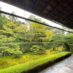 今がチャンス♪ 京都にきはりませんか?