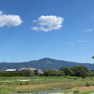 今の京都、賀茂川からお届けします♪