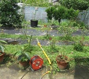 「雑草園」