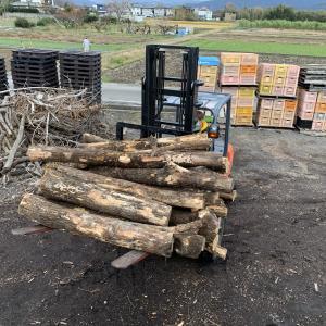 乾燥試験用の薪を作るため原木を運びました
