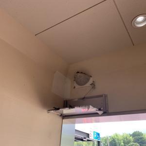 急遽 徳島〜高知でヘッドを引き取りました