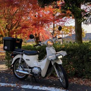 スーパーカブ110~休日ルーティン☆地元で秋のカブ散歩♪~