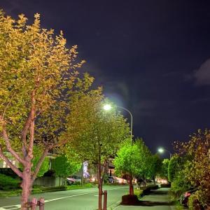 夜トレ四景~今年はヒノキ花粉が殊の外ツラい~
