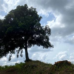 朝トレの帰りに謎解き探訪~あの木何の木気になる木~