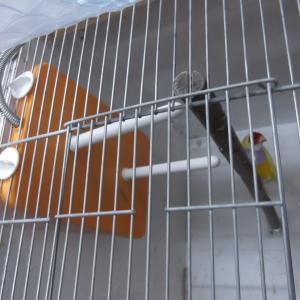 2巣箱3羽3羽