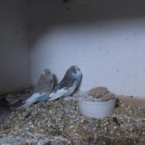 鳥仲間さんからの嬉しい連絡が続いています