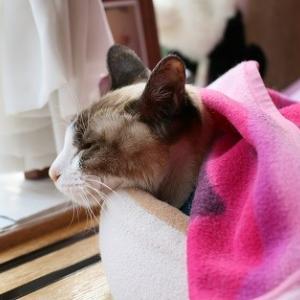朝晩寒くなりました