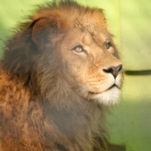 ライオン通信