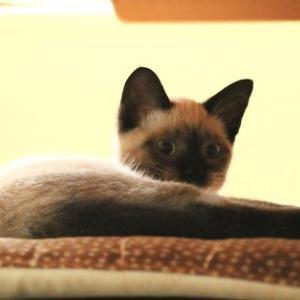 食卓イスに猫がいる