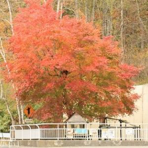 秋真っ盛りの動物園