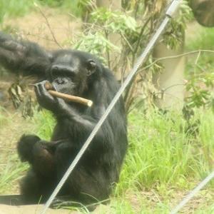 多摩動物公園の動物たち2
