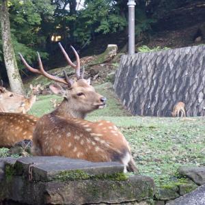 犬と鹿のご挨拶