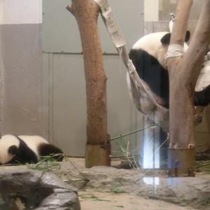 シャンシャン観覧と「大パンダ展」