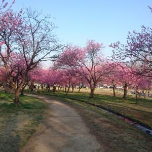 桃の花のお花見編~(o^―^o)💕