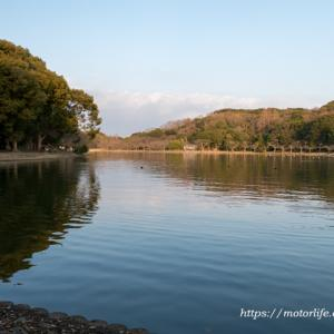 県立明石公園の野鳥 ☆