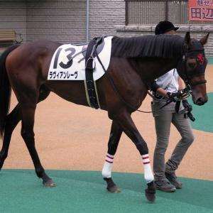 田村厩舎馬に注目