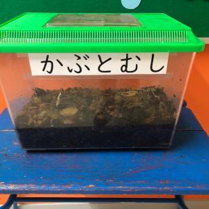 子どもは、カブトムシが大好き