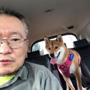柴犬まこ(我が家に来て1322日目)2020.7.11(土)