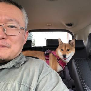柴犬まこ(我が家に来て1351日目)2020.8.9(日)