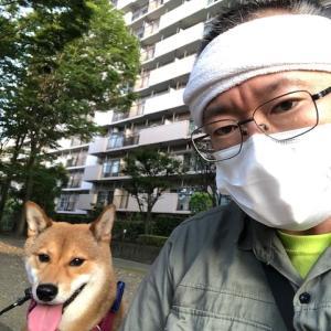 柴犬まこ(我が家に来て1352日目)2020.8.10(月)