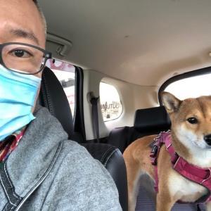柴犬まこ(我が家に来て1421日目)2020.10.18(日)