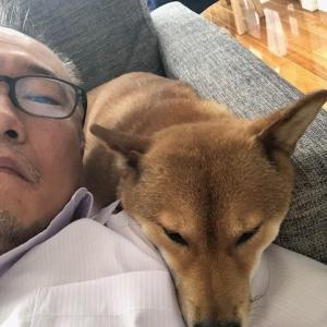 柴犬まこ(我が家に来て1677日目)2021.7.2(金)