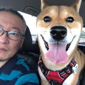 柴犬まこ(我が家に来て1706日)2021.7.31(土)
