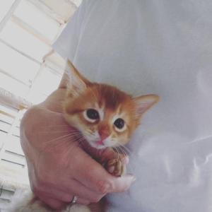 ソマリの子猫ちゃん
