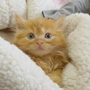 ミヌエットの子猫ちゃん