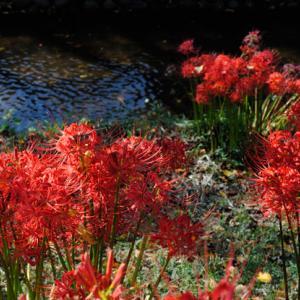 秋の花 Part2