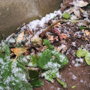 雪と、フキノトウと、スタンプと。