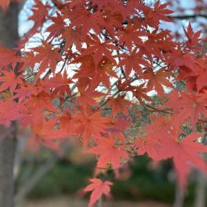 紅葉も終わるね