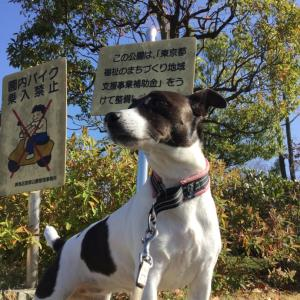 桜吹雪が似合う犬 2