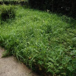 草刈り、散歩