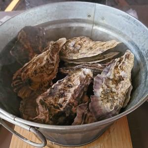 連休最終日~牡蠣と梅林~