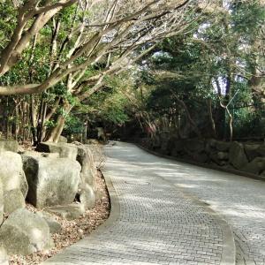 久しぶりの鎌倉②【長谷・由比ガ浜エリア】(2019.11.17)