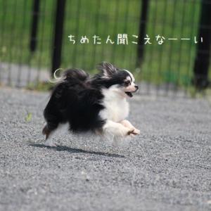家庭内別居騒動その2(本日写真ストック放出日)