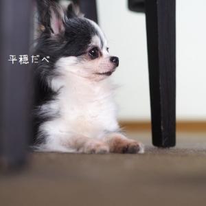 増殖する犬子
