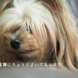 第二入院中の犬子