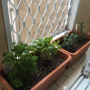 家庭菜園 = 家計安全