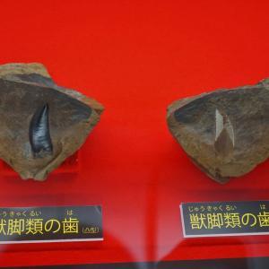 徳島県立博物館 恐竜化石展 見て歩記