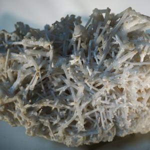 山サンゴ 原石の美と 工芸品の美