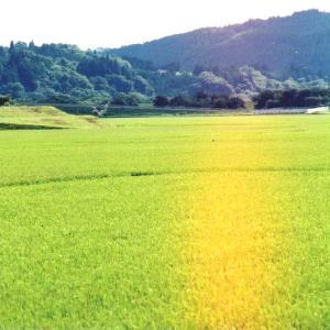 藤沢町黄海古戦場へ