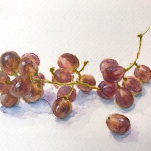 季節外れだけど…、葡萄を描いてみた!