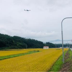 北海道旅行 5  美瑛から富良野へ