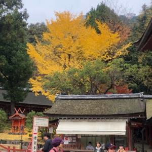 紅葉 2019 奈良