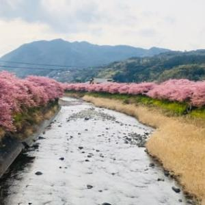桜とコロナ