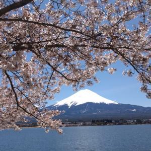 染井吉野(令和2年最後の桜ライド、新名庄川、河口湖北岸、富士ビューホテル、富士山)