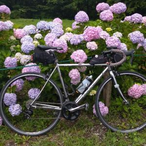 紫陽花&霧の箱根ライド