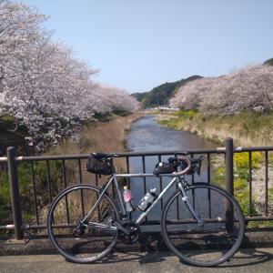 松崎町の那賀川の染井吉野(令和3年9回目桜ライド、伊豆半島、地魚料理さくら、走行距離207km)